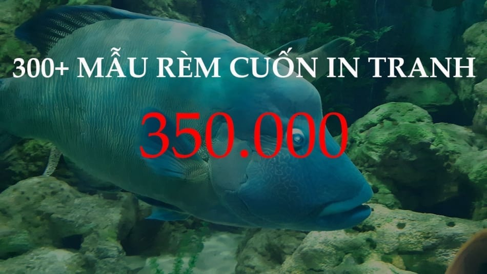 REM CUON TRANH 350K